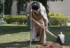 رهبر انقلاب: دستگاههای مسؤول جداً در مقابل آسیب زدن به درختان با انگیزه ساختمانسازی بایستند