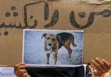 ماجرای فیلم سگکُشی با اسید به روایت شهرداری