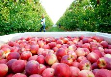 کشاورزی در بنبست حمایت