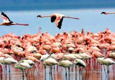 مرگِ مشکوک پرندگان مهاجر