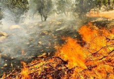 شعلههای آتش بر پیکر زاگرس