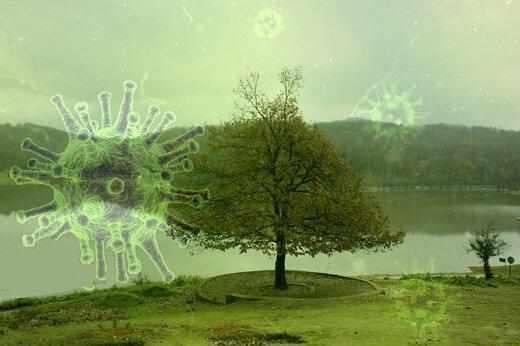 آثار ویروس سمج بر ساختار طبیعت