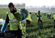 استثمار علنی کارگران در اروپا