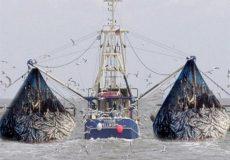توقف صید ترال قطعی شد