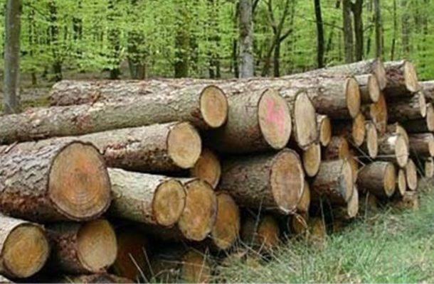 قاچاق چوب غمنامه درختان