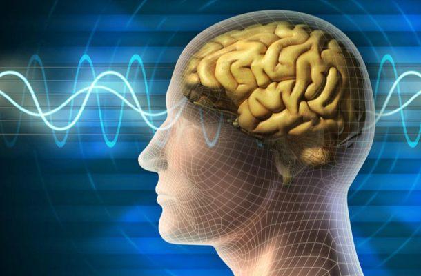 اینفوگرافی ؛ مغز انسان را بیشتر بشناسیم.