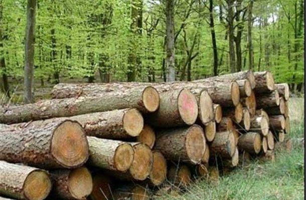 «تنفس»؛ قانونی به نفع جنگلها