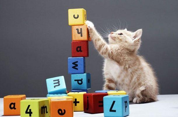 اهمیت خرید اسباب بازی و ملزومات حیوانات خانگی