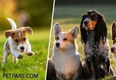 غذای سگ – همه چیز دربارهی برنامه غذایی سالم حیوان شما